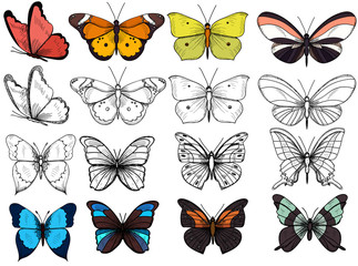 vector, isolated, butterflies, with sketch, set, collection, insects