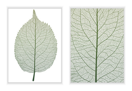 Beautiful background texture leaf  with leaves and space for text. Vector illustration. EPS 10.