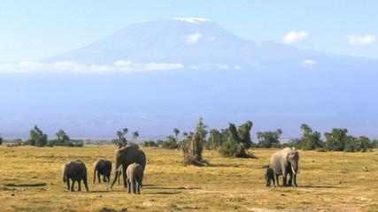 elephants facing forward with mt kilimanjaro at amboseli national park