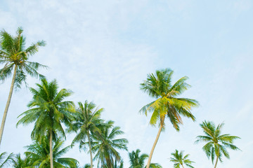 Coconut palm trees with sky and clouds.
