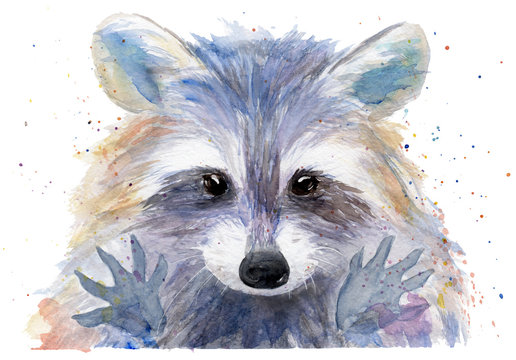 watercolor drawing of an animal - colored raccoon