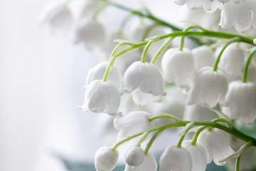 Fotorolgordijn Lelietje van dalen Lily of the valley, Convallaria majalis, white flowers for wedding