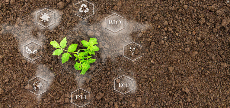 Smart farming with IoT, futuristic agriculture concept, cultivating ecological agricultural using innovative technologies
