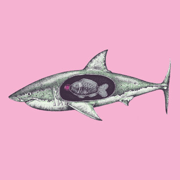 Illustration of shark with plastic soy sauce fish bottle in stomach