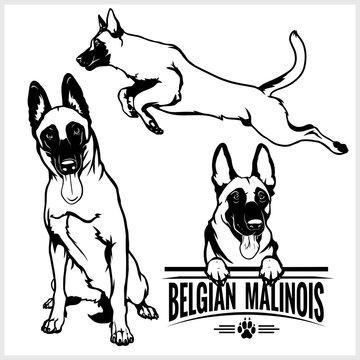 Belgian Malinois dog - vector set isolated illustration on white background