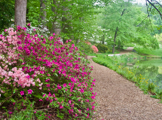 A Path Through Blooming Azalea Bushes at Brookside Gardens in Maryland