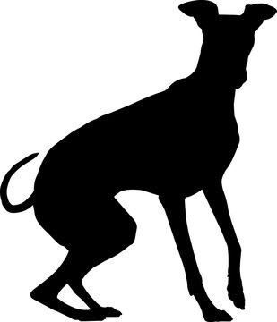 Greyhound 5 isolated vector silhouette