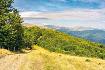 old country road through hills in to the primeval beech forest. nature scenery with trees along the way. sunny late summer landscape with clouds on a blue sky at sunset.