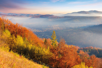 foggy autumn scenery in mountains at sunrise. red and yellow foliage on the trees. hazy weather in the valley