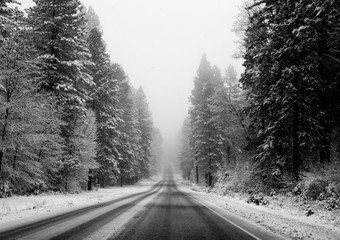 Snowy road through a forest in Northern California