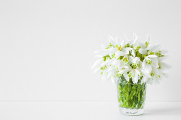 Welcome spring. Fresh, beautiful snowdrops on white shelf at light gray wall. First messengers of spring. Empty place for inspirational, emotional, sentimental text, quote or sayings. Front view.