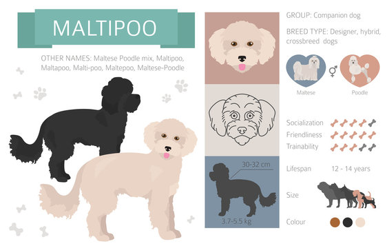 Designer dogs, crossbreed, hybrid mix pooches collection isolated on white. Flat style clipart infographic