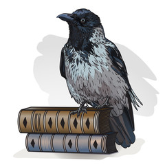 Grey crow sitting on a books on a white background. Vector illustration. Hooded crow bird, also known locally as Scotch crow, Danish crow.