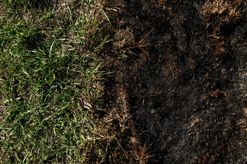 Picture of green grass and burned grass on field.