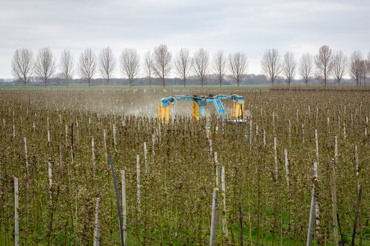 ASPEREN, THE NETHERLANDS - March 31, 2019: Modern orchard sprayer spraying insecticide or fungicide on his apple trees.