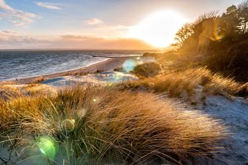 Photo sur Plexiglas La Mer du Nord Dünengräser im Licht