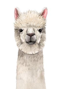 Watercolor lama portrait