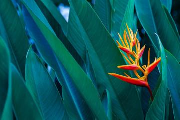 Keuken foto achterwand Texturen tropical leaves colorful flower on dark tropical foliage nature background dark green foliage nature