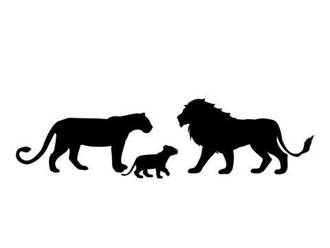 Lions family predator black silhouette animal. Vector Illustrator.