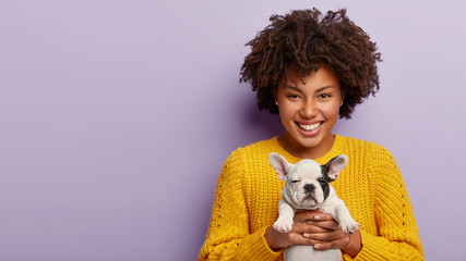 Enchanting lady with curly Afro hairstyle holds black and white french bulldog puppy, wears yellow clothes, makes present for friend who loves dogs, has sincere smile, isolated on purple background