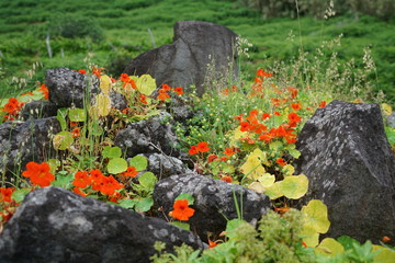 Close up with Madeira specific vegetation in a summer sunny day
