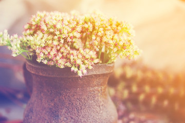 Flowers in an old clay vase, toned, soft focus
