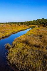 Coastal Saltwater Tidal Marsh in the Croatan National Forest, North Carolina
