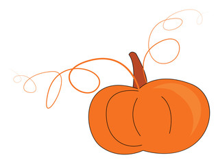 Pumpkin for eating, vector or color illustration.