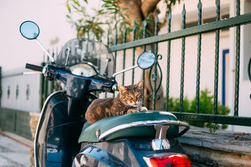 Sweet Cat Napping on the Scooter