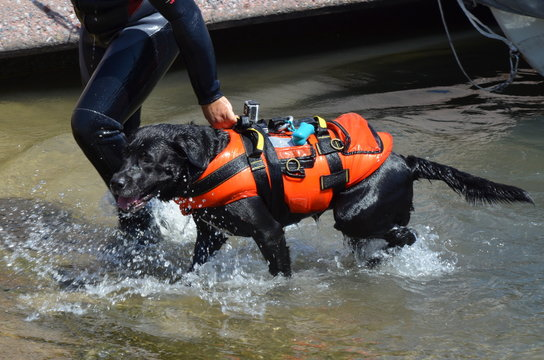 A Lifeguard dog