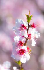 Recess Fitting Floral woman Frühling und Blumen_04