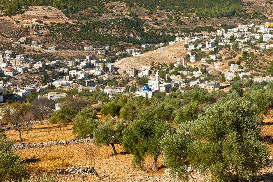 Olivares y valle de Ajloun. Jordania, Oriente Medio