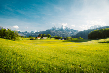 Foto op Canvas Blauwe hemel Idyllic landscape in the Alps with blooming meadows in springtime