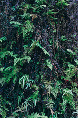 Green leaves background. Natural tropical background nature forest jungle foliage.
