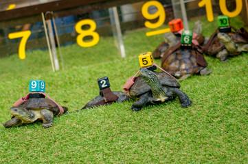 番号をつけられた亀のレース