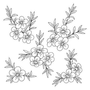 Manuka flower graphic black white isolated sketch illustration vector