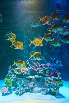 Fish at Bahamas Atlantis Paradise Island