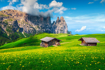 Wall Mural - Alpe di Siusi resort and spring yellow dandelions, Dolomites, Italy