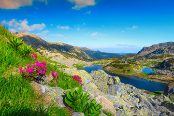 Wall Mural - Summer mountain landscape with flowers and alpine lakes, Transylvania, Romania