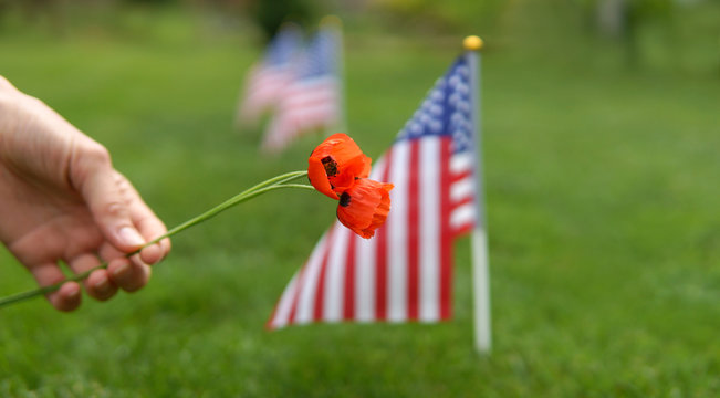 Woman hand with flowers honoring american soldiers on memorial day. Memorial day concept