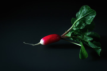 Fresh red radish on a dark table. Growing organic vegetables. A bunch of raw fresh radishes on a dark background ready to eat. Raw foods. food photography