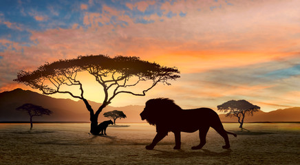 Lion and lioness at sunset