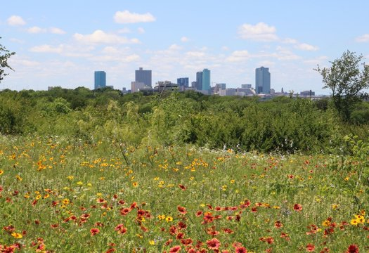 View of downtown Fort Worth, TX from a field of red and yellow wildflowers in full bloom