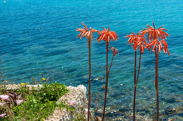 Exotic red flowers and sea