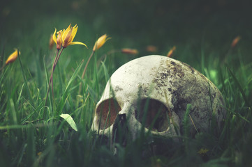 Real human skull on a background of nature meadow flowers. Remains of medieval warrior on the battlefield. Gothic cover