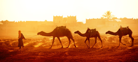Poster Morocco Caravan of camels in Sahara desert, Morocco