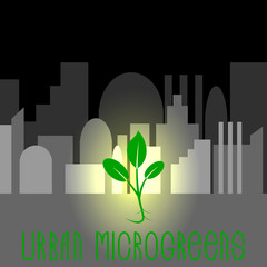 Urban Microgreens. Concept for urban microgreen farms. Small plant on a background of gray city