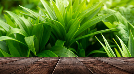 Spring background table. Green floral background, blurred background. Young green leaves, grass....