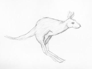 sketch of jumping kangaroo hand drawn by pencil