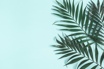 Palm leaves on pastel blue background. Summer concept. Flat lay, top view, copy space